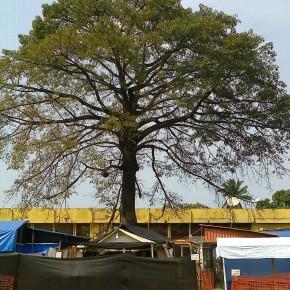 Centre de traitement Ebola à Donka - crédit photo: Alimou Sow