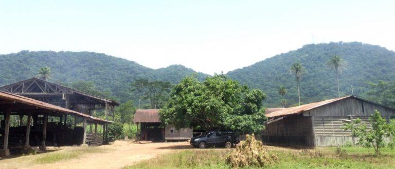 Article : Au cœur de la forêt guinéenne, les trésors du Ziama