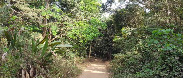 Article : Jardin de la Camayenne, petit bout de paradis au cœur de Conakry